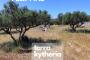 """ΠΡΟΣΚΛΗΣΗ σε Διαδικτυακό Εργαστήριο με θέμα: Παρουσίαση των εργαλείων """"ευφυούς γεωργίας"""" Terra Kytheria"""